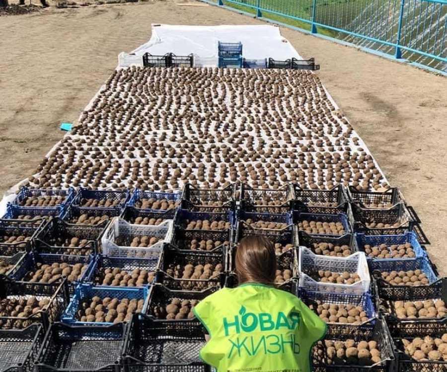 Пруд в Абакане очистят с помощью ЭМ-колобков